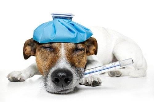 какая температура должна быть у собак